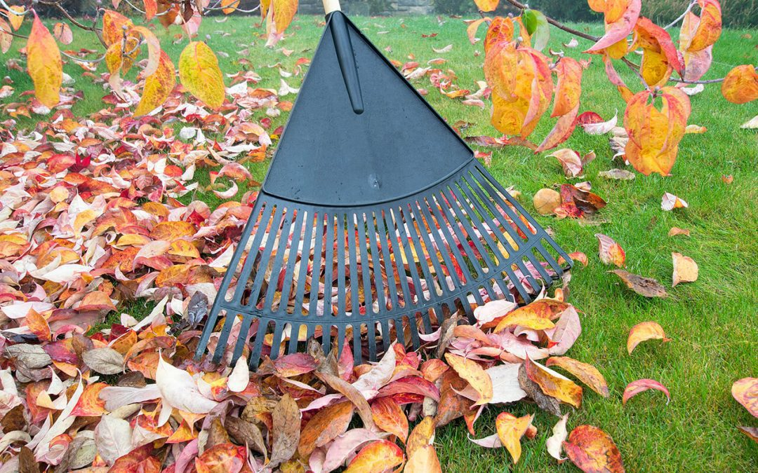 7 Fall Lawn Maintenance Tips for Homeowners